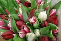 Tulips / Such beautiful flowers, from Holland... naturally!