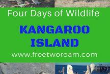 Animals and Wildlife Around the World / 0