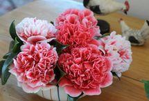 Nos bouquets de Camélias