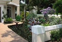 Tampa Landscape Design Tropical Oasis / Tampa tropical landscape design by Lauren Shiner, Landscape Designer.
