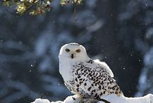 Owls / by Stacey Snyder-Null
