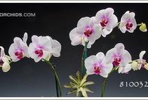 Flowers to Brighten My Day