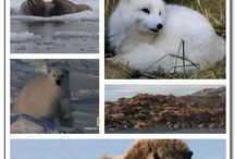 Arctic and Antactic