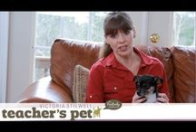 Training Tips Dogs & Cats / Training tips for both cats & dogs.