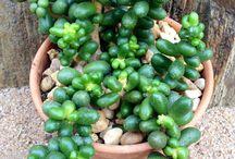 Plants & Cactus