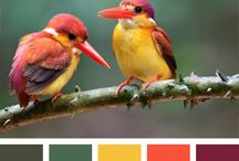 Przykłady kolorów
