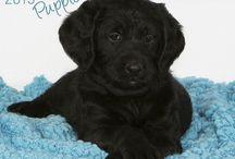 2015 puppy calendars / by MegaCalendars.com
