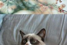 Grumpy Cat  / by Cee Cee