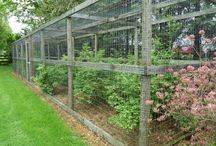 berry cage