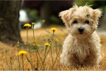 puppy love / by Amelia Hartman
