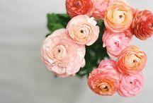 || FLOWER POWER ||