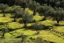 Olives & Olis