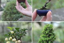 Creative ways with plants (Bonsai) / all sorts of creative ideas