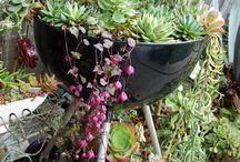 Plants & garden