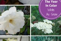 The Year In Color / This is our special gardening series featuring flowers & plants available in specific colors during the year.