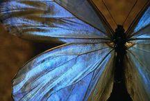 Butterflies / by Melissa Taylor
