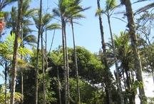 Un sueño hecho realidad/ Ein Traum wird wahr - Costa Rica