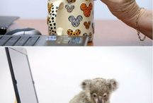 This one time, we rescued a baby koala joey.
