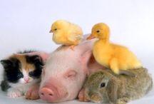 Animalitos / Animales perdón