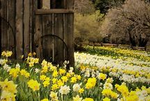 Les saisons: le printemps
