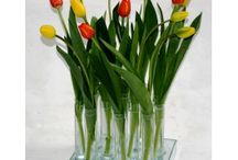 tulipanes in acqua