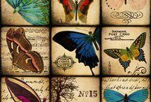 Mariposas y gatos / Porque amo las mariposas y los gatos