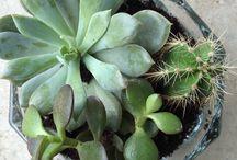 Всякие цветочки и растения