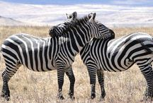 Travel: Africa / by Melana Orton