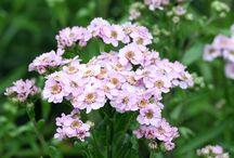 ukens blomster