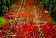 In Love with Autumn / There is so much beauty in autumn and so much wisdom; so much separation and so much sorrow!