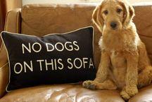 Entrenamiento de perro