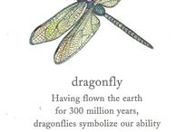 Dragonflys / by Julie Little-Finger