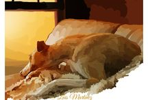 Dogs, Whippets, Lebrels and Greyhounds Pictures / Dibujos y pinturas sobre Whippets, Galgos y perros...