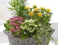 Summer Flowers / Beautiful range of Summer flowers from Flowers.ie