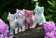 Cats / Interesting and beautiful cats and kittens / by Lois Auclair