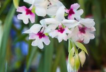 Mary's Peak Orchid Society Annual Orchid Show and Sale