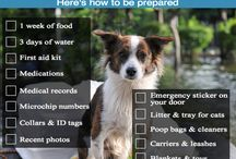Good Dog Information