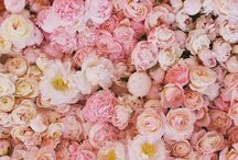 Flowers& Plants World: My Love!