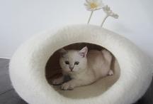 kattenmand wit