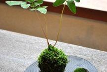 盆栽•苔玉•庭便り