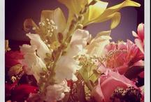 pretty flowers / by Marci Cohen