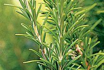 Herbs and greenery