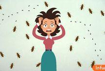 Как избавится от тараканов и муравьёв без химических веществ
