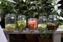 YOKimGlas / einkochen, einlegen, konservieren