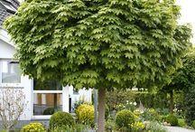 Bäume Garten