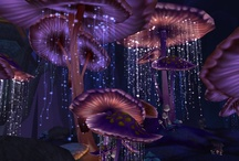 Forest creatures, fungus & mushrooms