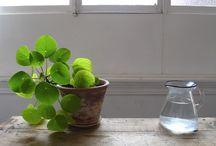 grönväxter