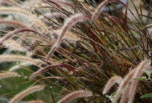 Grasses- oh the beautiful grasses!!!