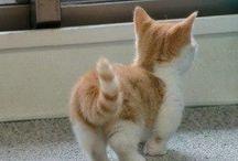 MIDGET CAT, I NEED ONE / by Mary M. Tempesta