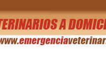 Servicios para Mascota / www.buscomascota.cl/servicios-para-mascotas/